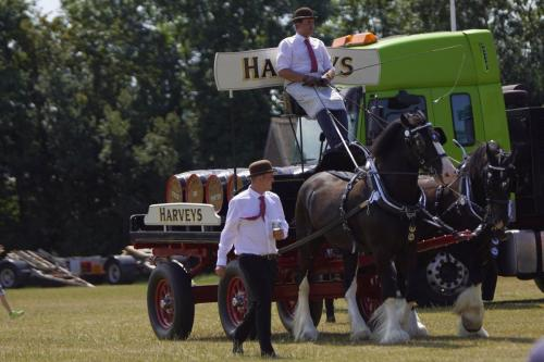 Harveys Dray Horses at Eastbourne Lakeside Festival